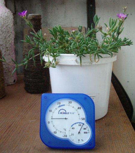 Фотография делоспермы и термометра, показывающего +3°C (45Кб)